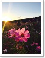 La iglesia de Dios,amor,flor,cosmos